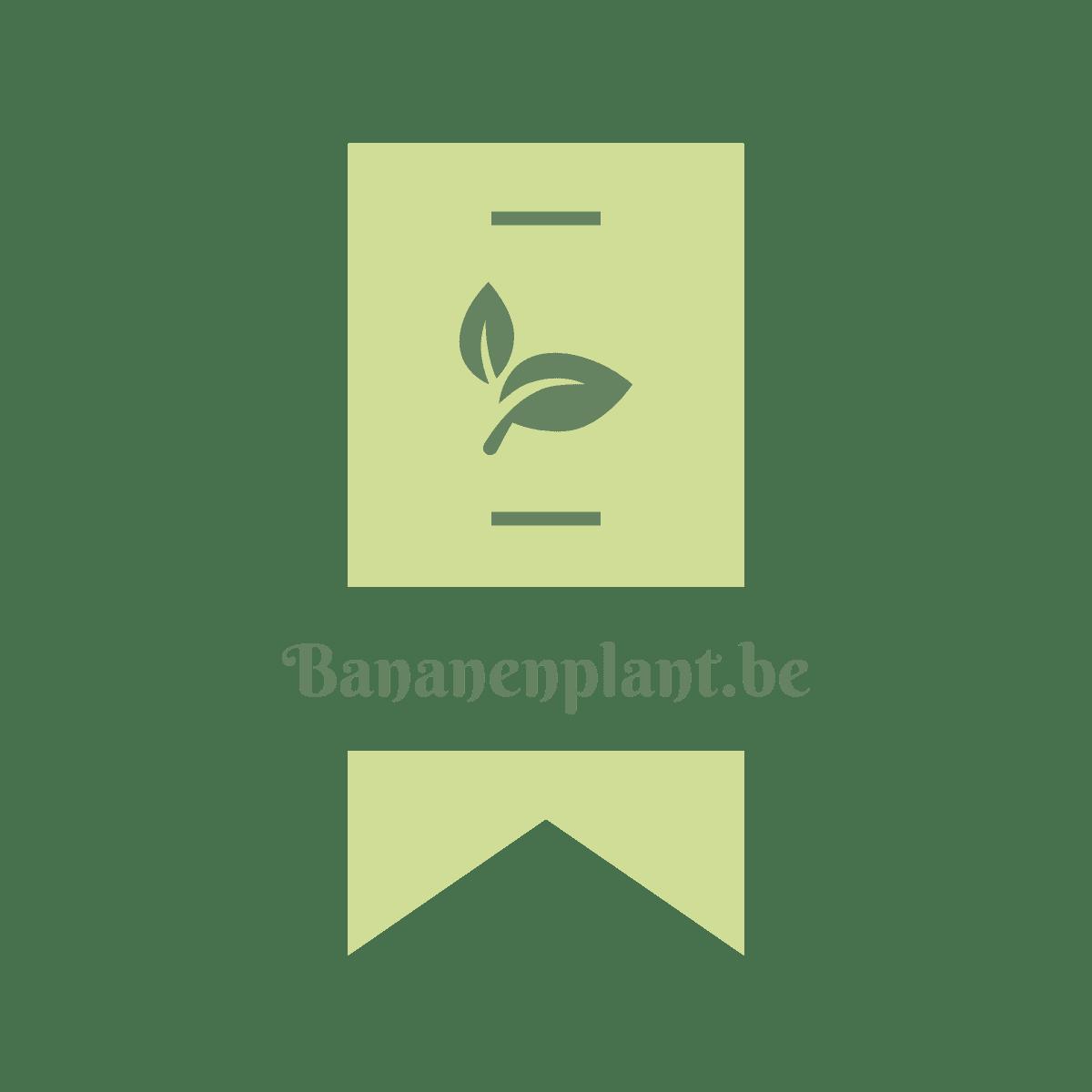logo_bananenplant